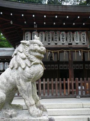 Wächterlöwe am Kumanonyakuōji Schrein