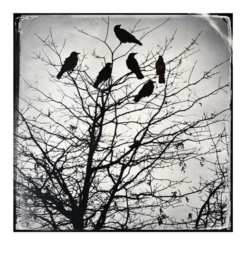 Crows, London, 11.3.16