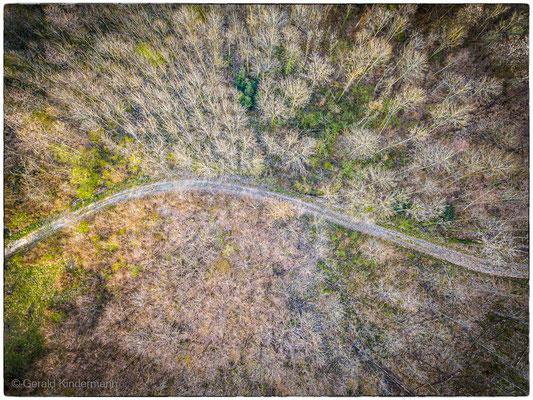 Im Rührberger Wald