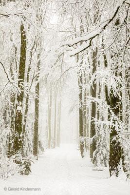 Der Waldweg ist fast nicht mehr zu erkennen