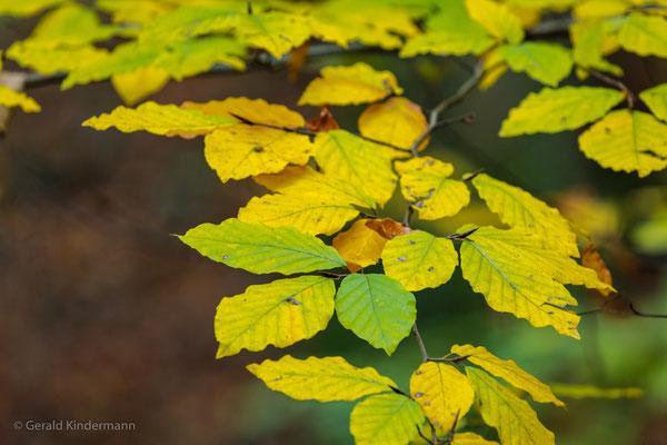 ..der Herbst grüsst mit seinen Farben