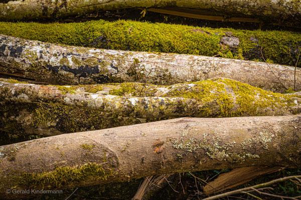 "Im Wald gibt es so viel Nutzholz - oft leider nur ""Käferholz"""
