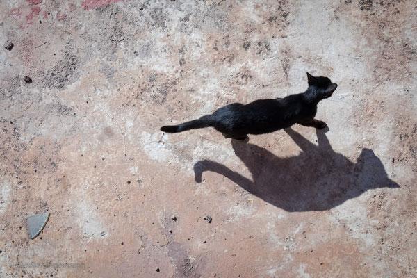 Katze auf dem heissen Dach...