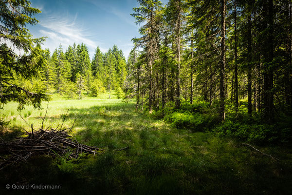 Moor am Zauberwald in Bernau