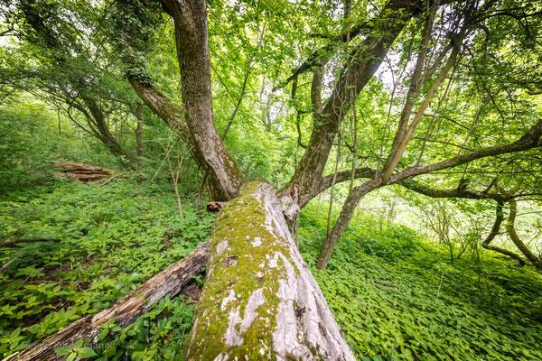 umgestürzte Bäume bleiben einfach liegen
