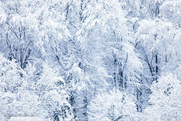 Selten hatten wir schon so viel Schnee!