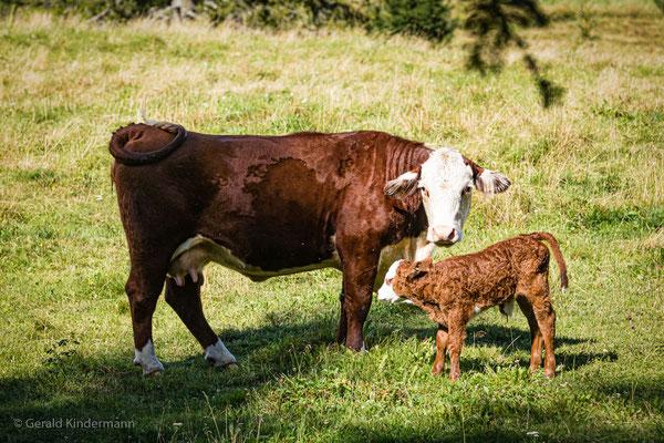 Mutterfreuden