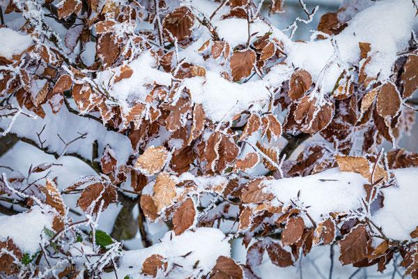 Eisblätter am Waldrand