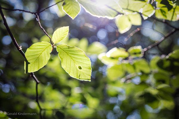 Im Wald bei Kirchanschöring