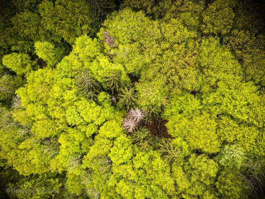 Insel im Wald