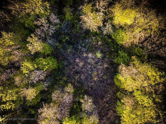 Kreisrunde Waldlichtung