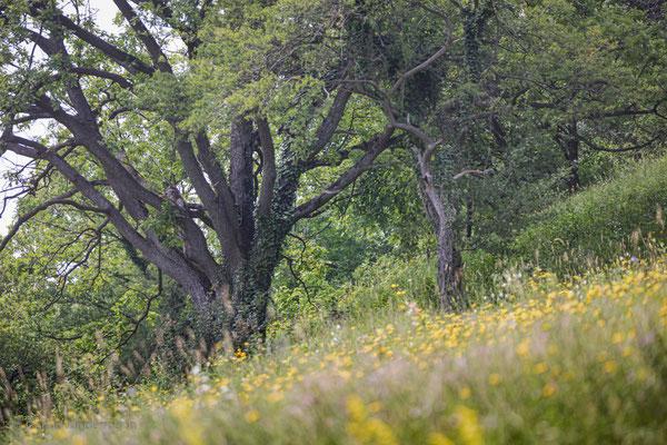 Auf dem Trockenrasen (Eningen unter Achalm)