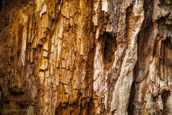 Alte Eiche - Holz