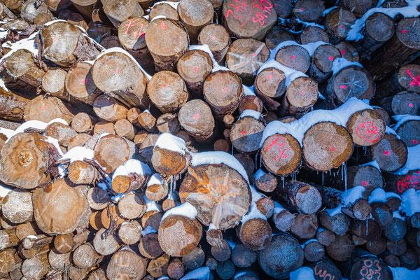 Der Winter ist kalt - es braucht viel Holz zum heizen!