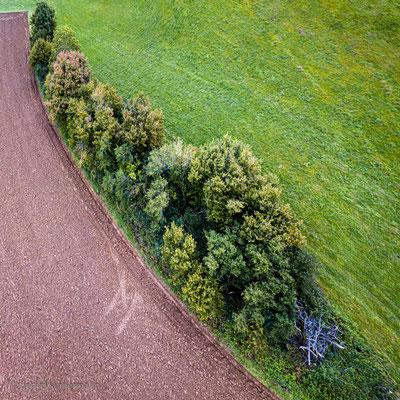 Baum- und Strauchriegel zwischen den Feldern
