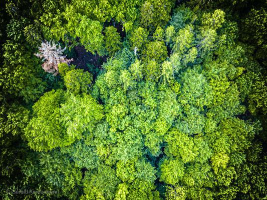 ...nicht alle Bäume haben überlebt
