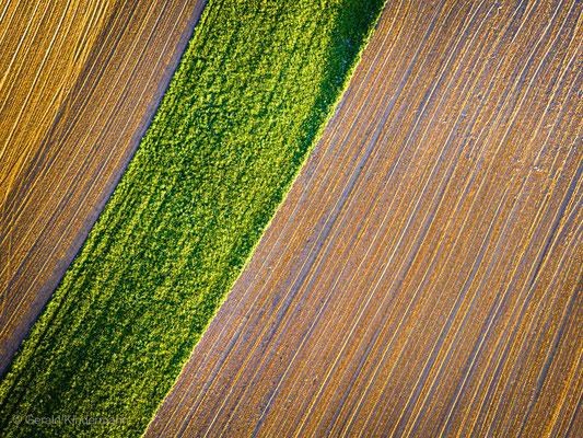 Felder im Streiflicht