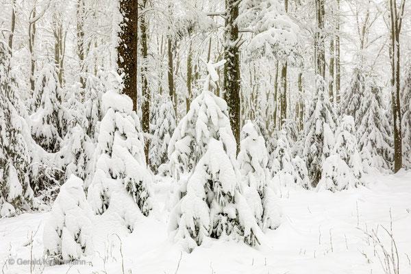"""Baum-""""Mandl"""" im Schwarzwald"""