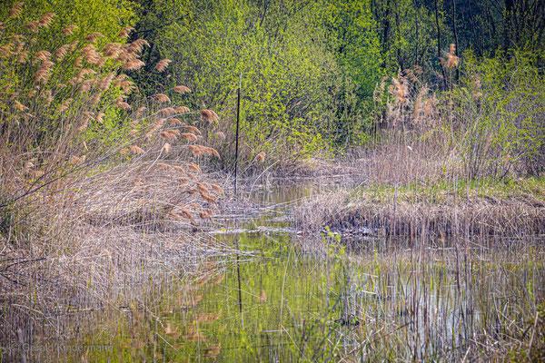 Biotop in Wyhlen