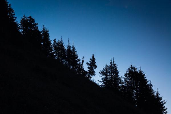 Scherenschnitt im Sonnenaufgang