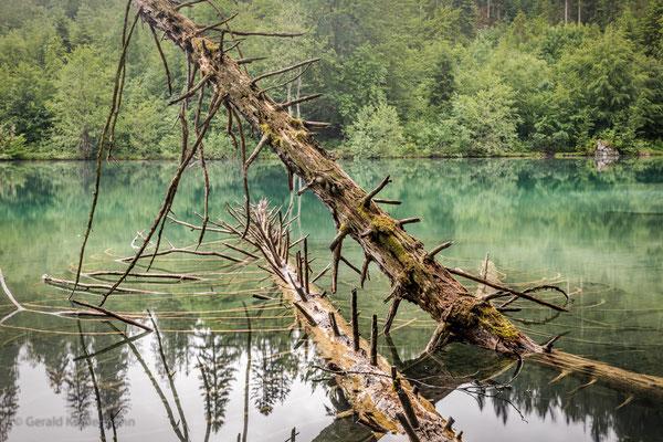 """Baum-""""Leichen"""" bleiben einfach liegen"""