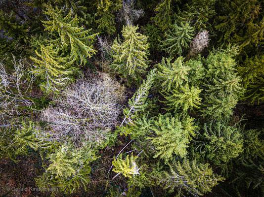 Top-Shot im Wald