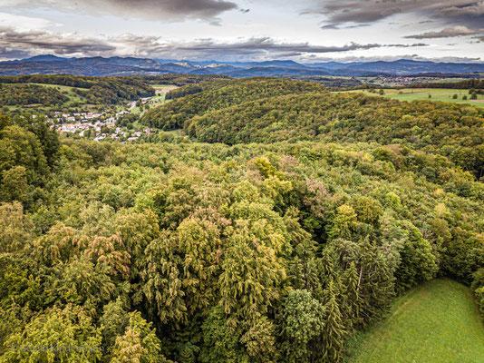 Blick in den Südschwarzwald