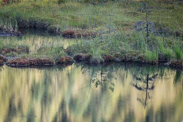 Auf der Torfinsel wachsen schon kleine Bäume