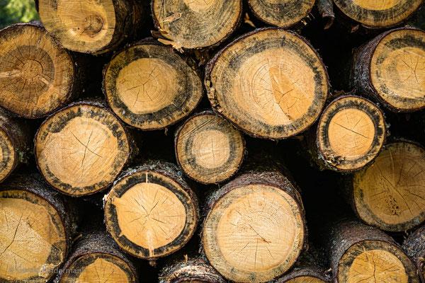 ...und immer wieder Holz...