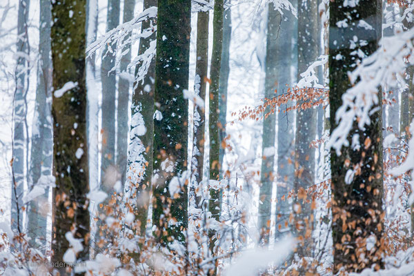Wintertraum im Wald
