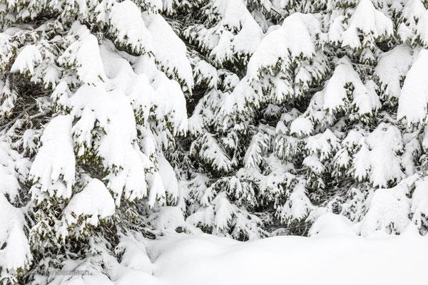 Auf den Bäumen liegt eine grosse Schneelast