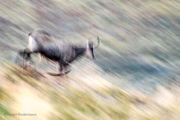 Wilder Lauf