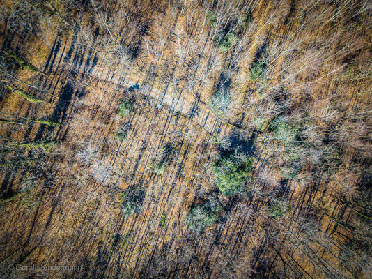 Schattenwurf im Frühlingswald