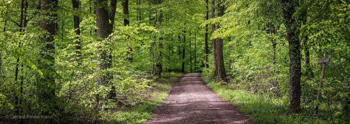 Im Wald bei Niedereggenen