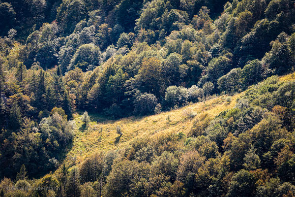 Waldlandschaft an der Martinswand