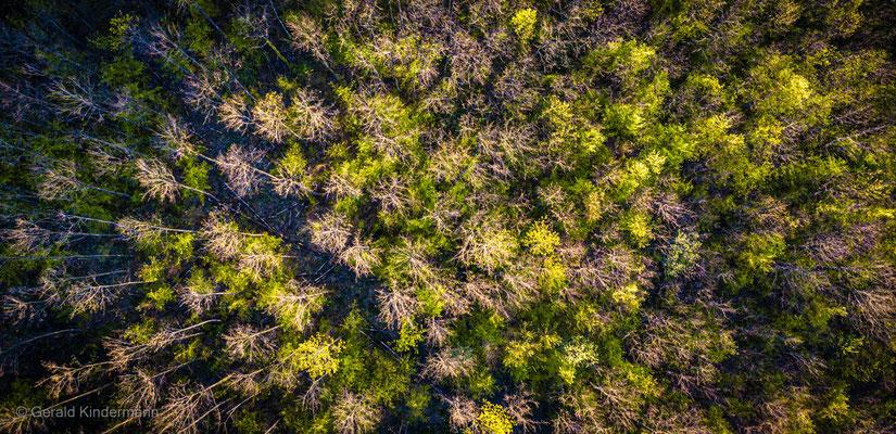 letzte Sonnenstrahlen im Wald