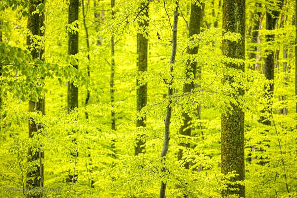Ein Traum in Grün