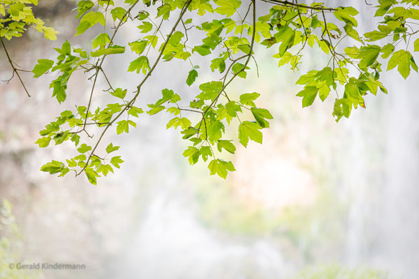 Blätter vor dem Wasserfall