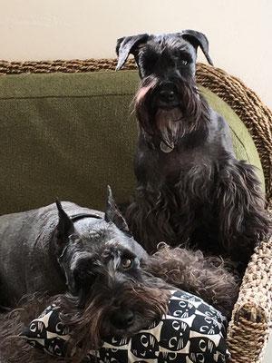 ジュエリーサイドの看板犬 ルナ&ジミー