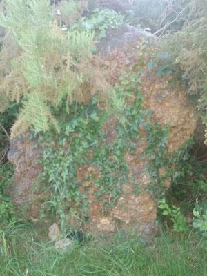 Menhir de la Ruère Judas (Thilouze)