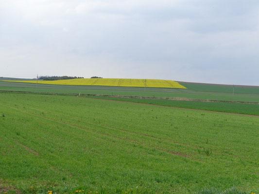 Rapsfeld irgendwo in Böhmische Paradies