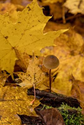 20-Herbst-3