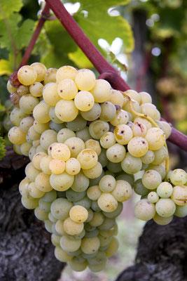 séjour dans le vignoble bordelais