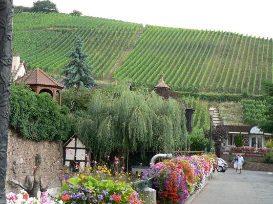 Виноградники Эльзаса