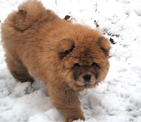 Первая прогулка и первый снег