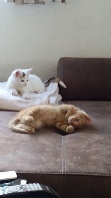 Meine Katzen (Hera und Helios)