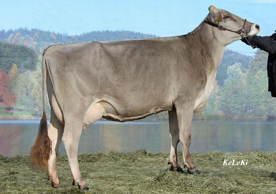 Zoja (Geb. 2007) (Bei Kälbergeburt vom 5. Kalb gestorben) (Lebensleistung: in 4 Laktationen 51'047 Liter Milch)
