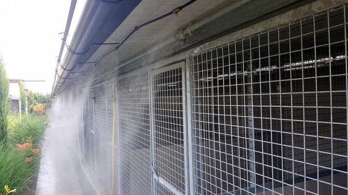 box climatizzati con un sistema di nebulizzazione che rinfresca il cane ma non lo bagna