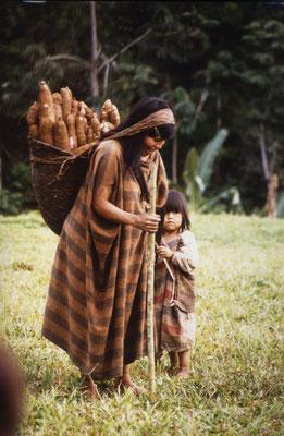 Maniok (und Kochbananen) sind die Grundnahrungsmittel.