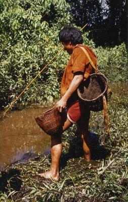 Fischen mit Barbasco, einem Wurzelgift. Die Fische werden betäubt.
